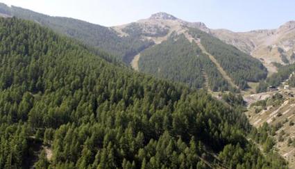 Image 06 Forêt