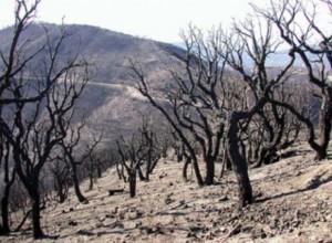 Forêt incendiée Maures 2003