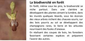 Image Biodibersité