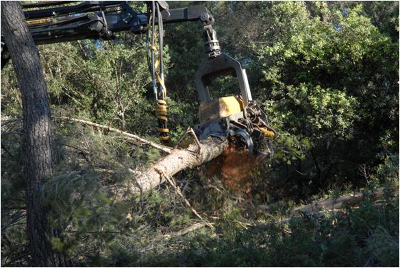 S13BE D13p1 arbre entier