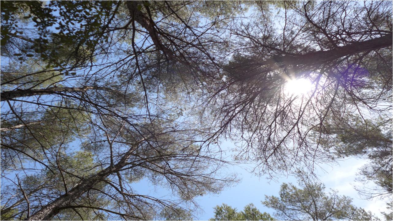 S13BE Houppiers et ciel